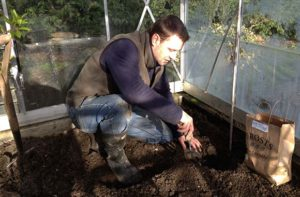 Planting Early Potatoes in the Greenhouse