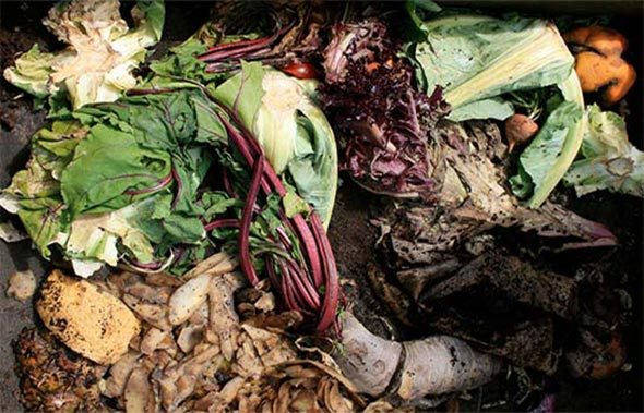 Compostable Vegetables