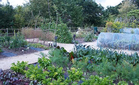 Garden Crop Rotation