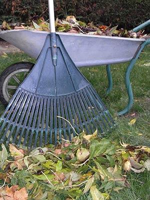 Leaves-in-wheel-barrow_17483