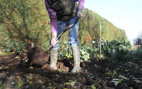 mulching vegetable bed
