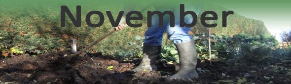 November Vegetable Garden