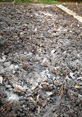 wood ash on garden