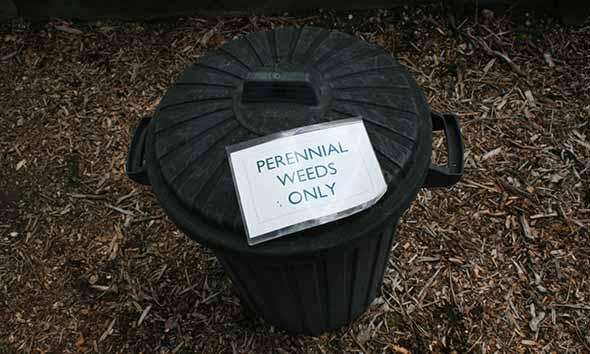 Perennial Weed Bin